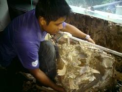 珠海防虫灭鼠