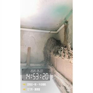 白蚁侵蚀室内